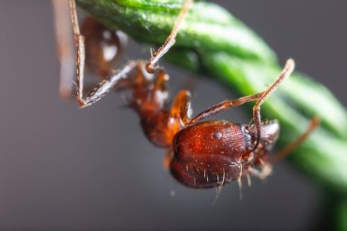 Ilmainen kuvapankkikuva tunnisteilla antenni, eläin, eläinkuvaus, hyönteinen