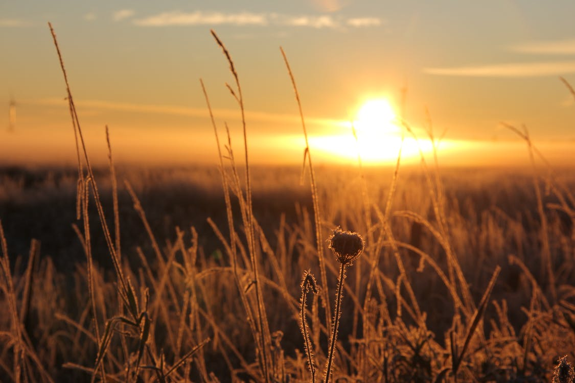 Darmowe zdjęcie z galerii z czyste niebo, pole rolnicze, wschód słońca