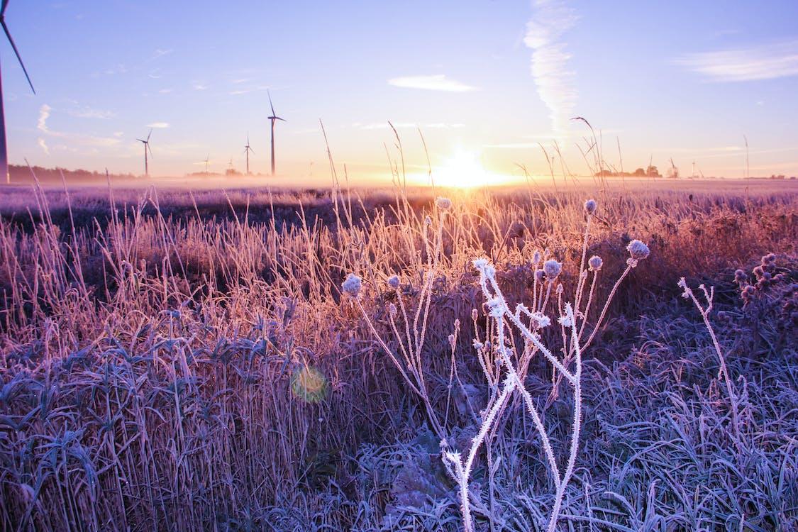 Základová fotografie zdarma na téma modrá obloha, ranní slunce, svítání