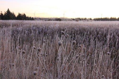 Free stock photo of farm field, frozen, windmills