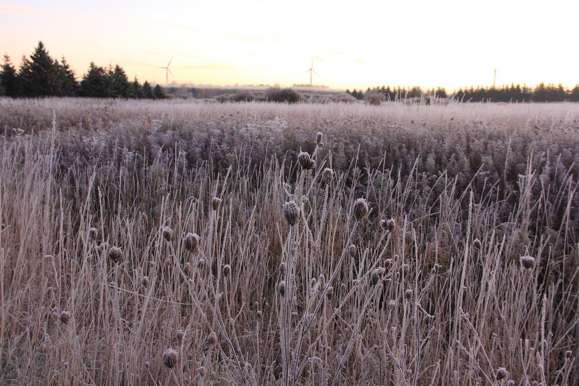 Darmowe zdjęcie z galerii z mrożony, pole rolnicze, wiatraki