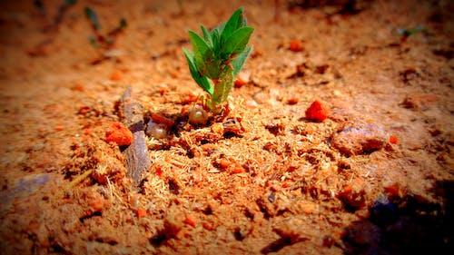 Free stock photo of desert, lone, summer