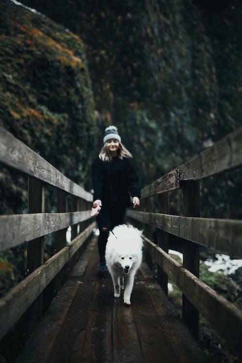 Бесплатное стоковое фото с активный отдых, деревянный мост, домашнее животное, дорожка