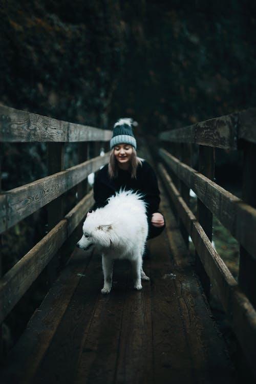 Foto stok gratis , alam, anjing, bahagia
