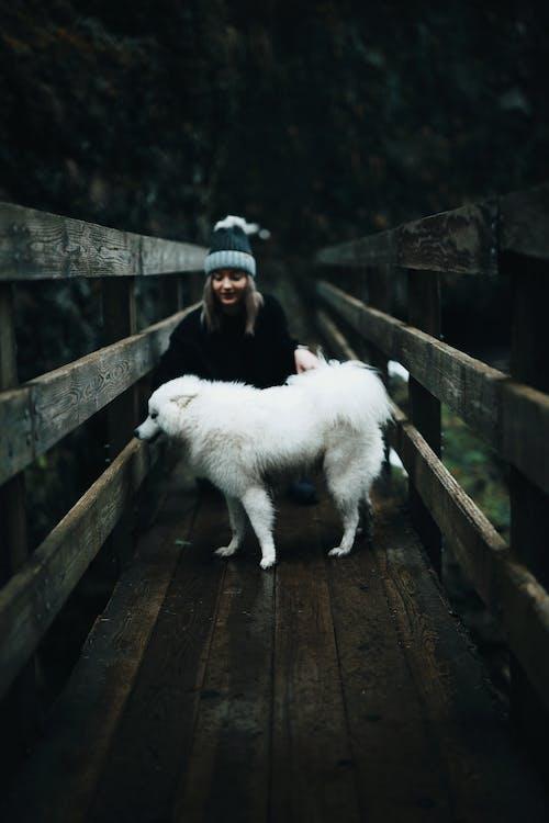 Foto stok gratis alam, anjing, belum tua, berdarah murni
