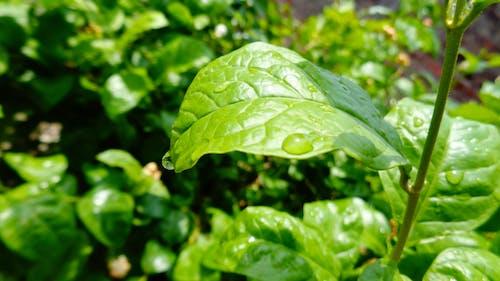 Free stock photo of nature, rain drops