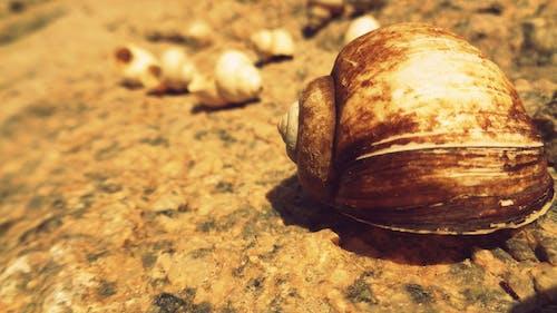 Free stock photo of seashells, summer