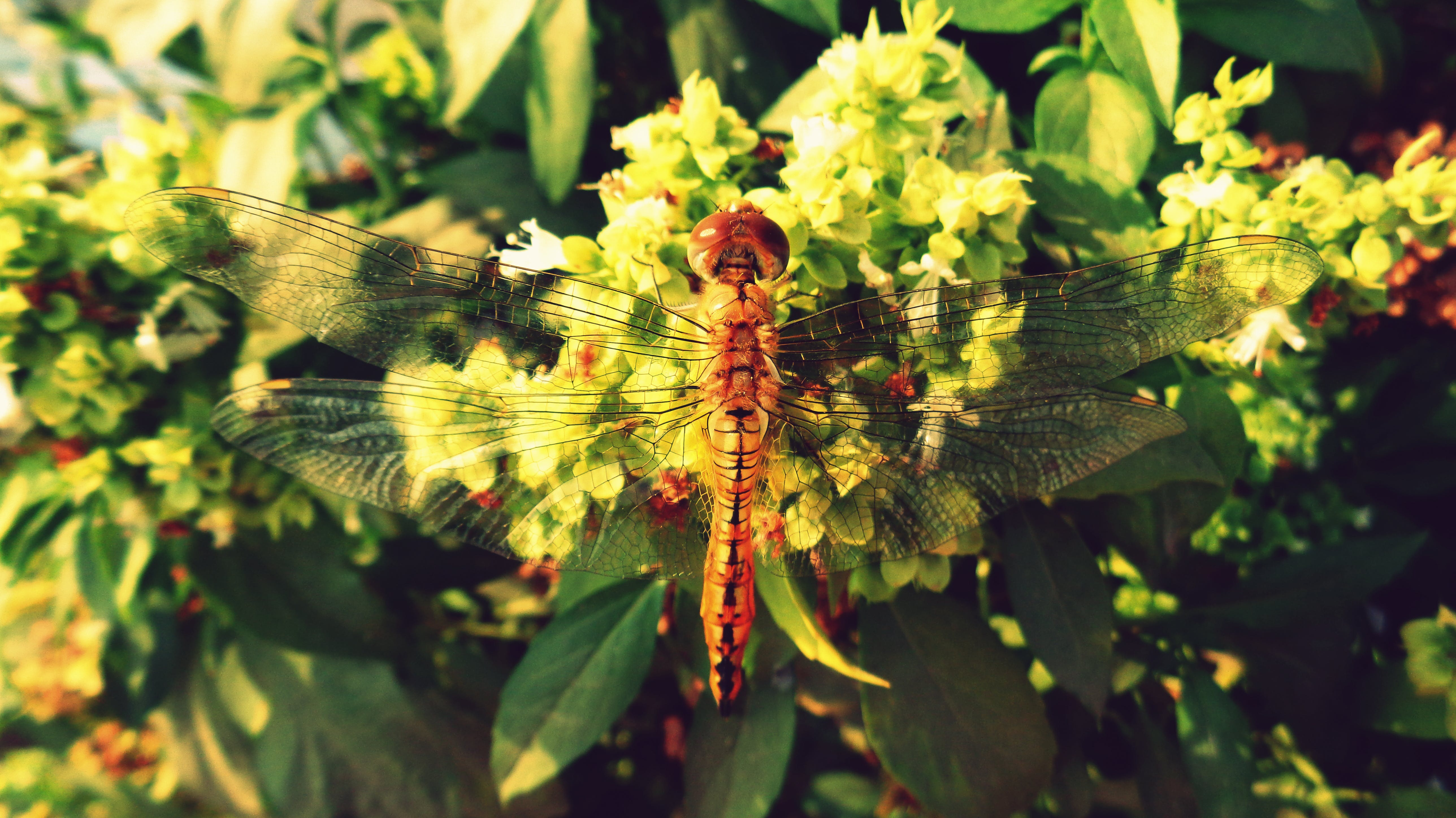 Free stock photo of symmetry, dragon fly