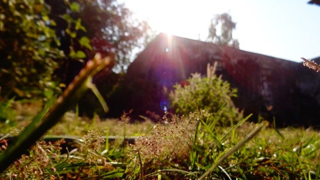 Free stock photo of sun, blade of grass