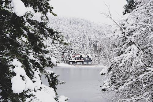 Безкоштовне стокове фото на тему «дерева, засніжений, застуда, зима»