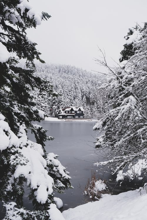 Lake Between Trees Covered With Snow