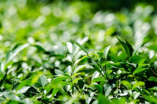 Foto stok gratis Daun-daun, hijau, kebun, kedalaman lapangan
