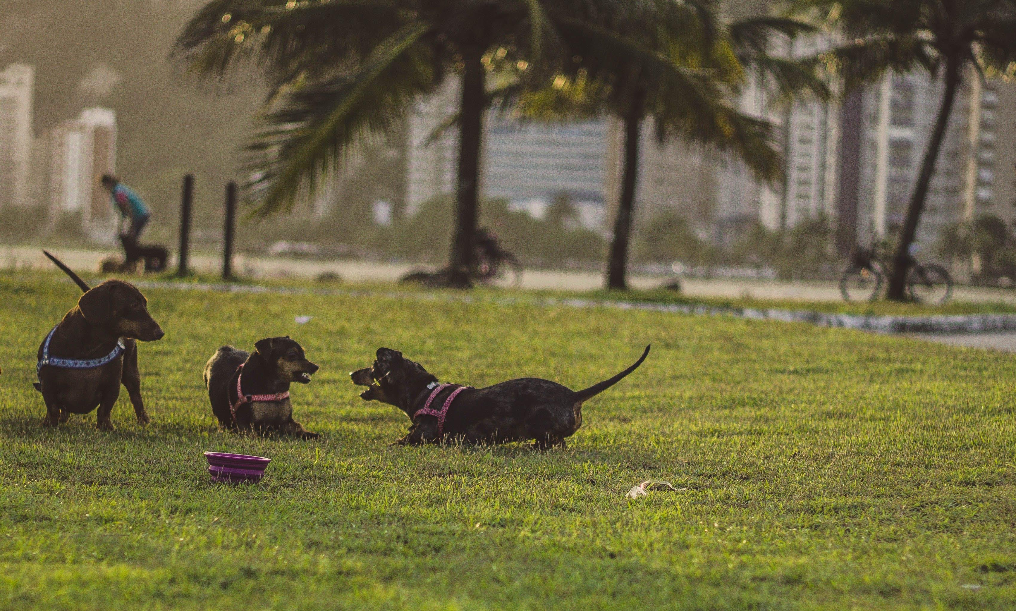 Free stock photo of animal, dog, cute, dogs