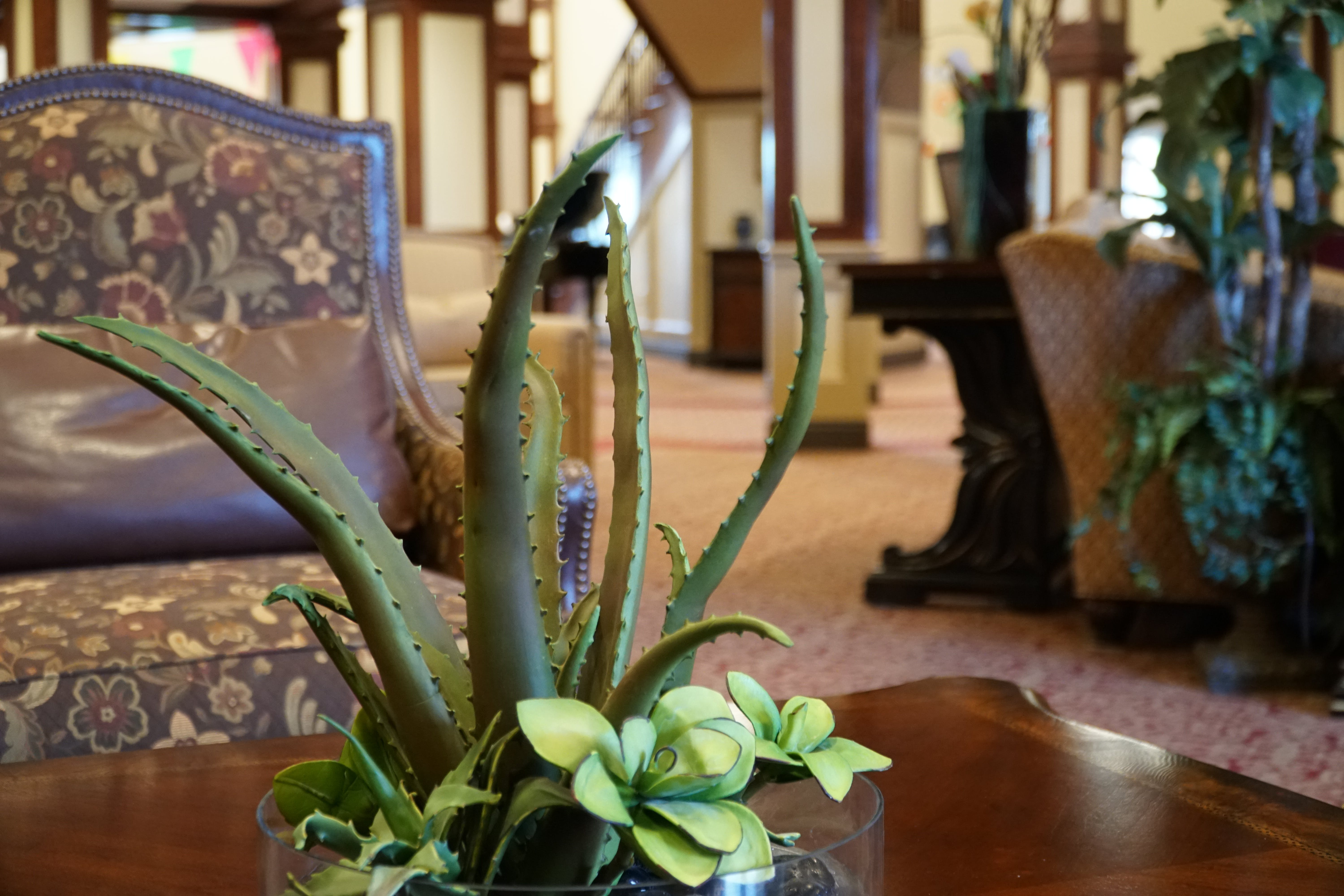 Free stock photo of chair, lobby, aloe, Aloe vera