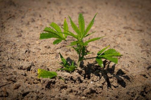 agbiopix, 早期, 綠色, 農作物 的 免费素材照片