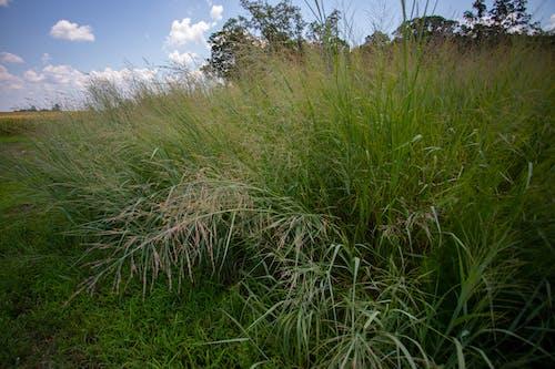 agbiopix, 换草, 生物燃料, 農業 的 免费素材照片