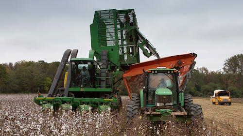 agbiopix, 收成, 棉花, 行作物 的 免费素材照片
