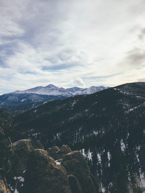 Immagine gratuita di alberi, colorado, escursionismo, foresta
