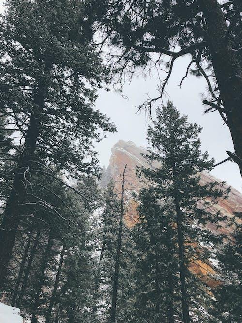 Dağın Yakınındaki Yeşil Ağaçlar