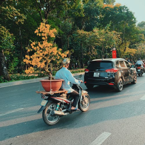 テトベトナム, 咲く花, 旧正月, 自動車の無料の写真素材