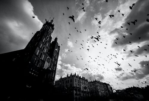Grayscale Photo Of Flock Of Birds Flying Over A Building