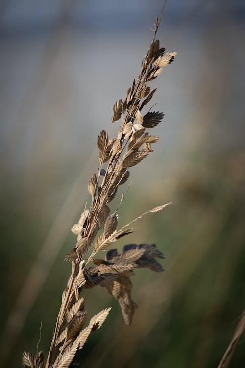 agbiopix, 侵蝕, 海岸, 海燕麦 的 免费素材照片