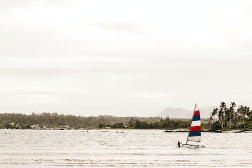 Person Windsurfing on Sea