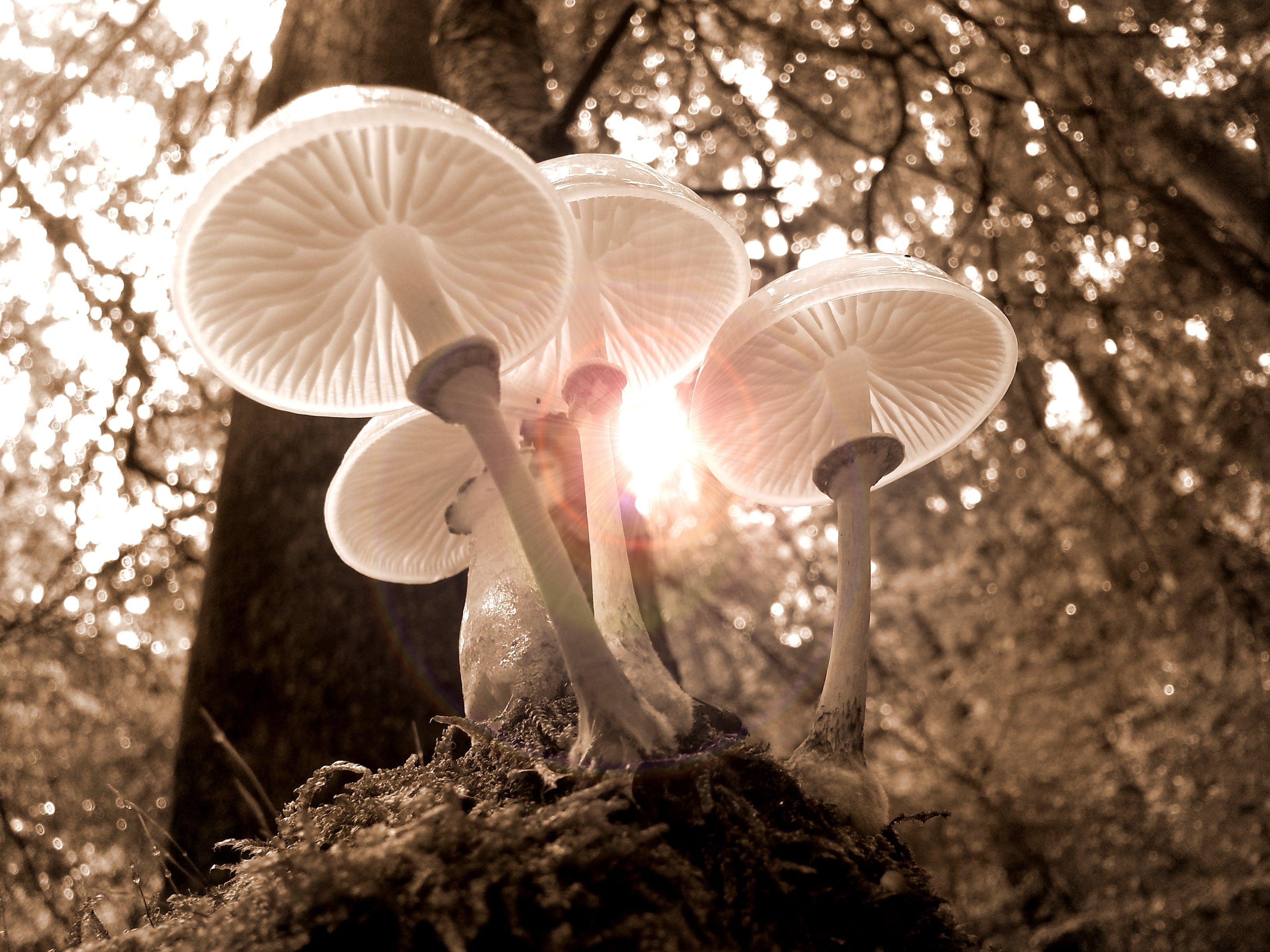 forest, fungus, landscape