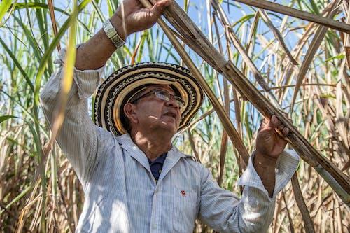 Man Holding a Sugar Cane