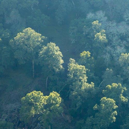 Immagine gratuita di alberi, contrasto, escursionismo, esterno