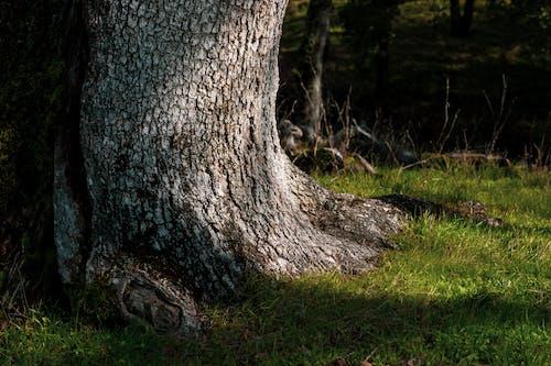 Immagine gratuita di albero, ligh, ombre, sfondo
