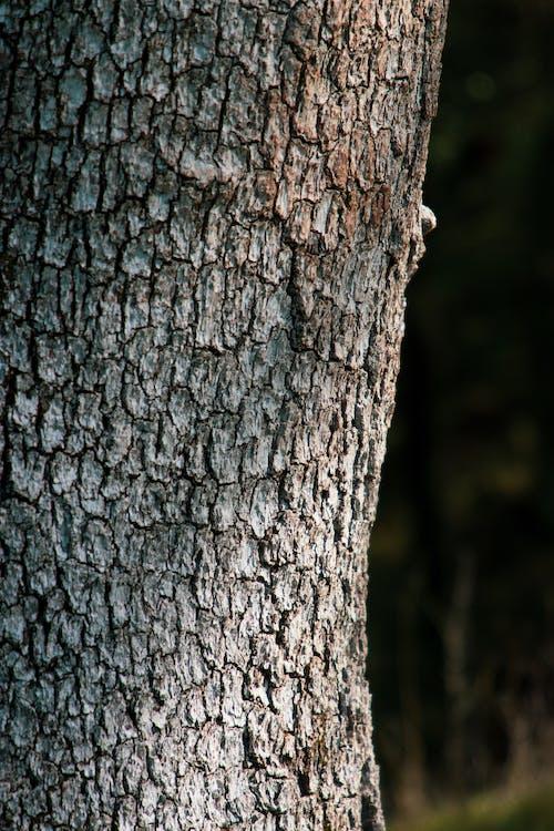 Immagine gratuita di albero, astratto, foto astratta, legno