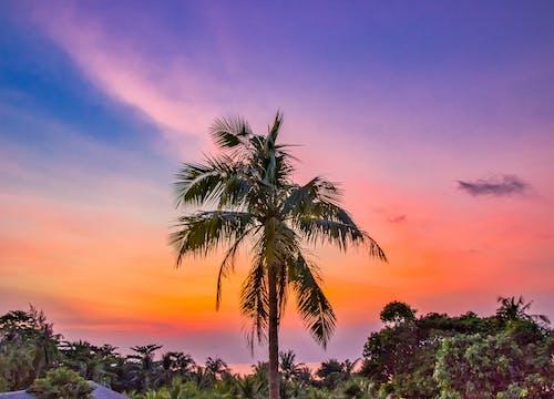 Ilmainen kuvapankkikuva tunnisteilla aasialainen, eksoottinen, kaunis auringonlasku, matkustaa