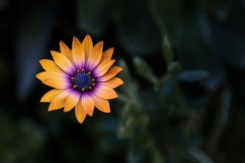 Ilmainen kuvapankkikuva tunnisteilla hauras, hieno, kasvikunta, kasvu