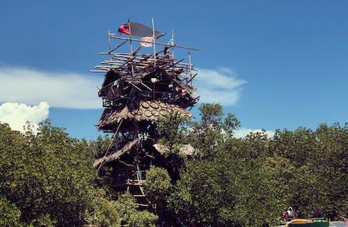 Fotobanka sbezplatnými fotkami na tému dom na strome, mangrovy