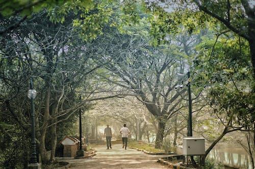 Gratis arkivbilde med estetisk, jogge, skjønnhet i naturen, solstråle