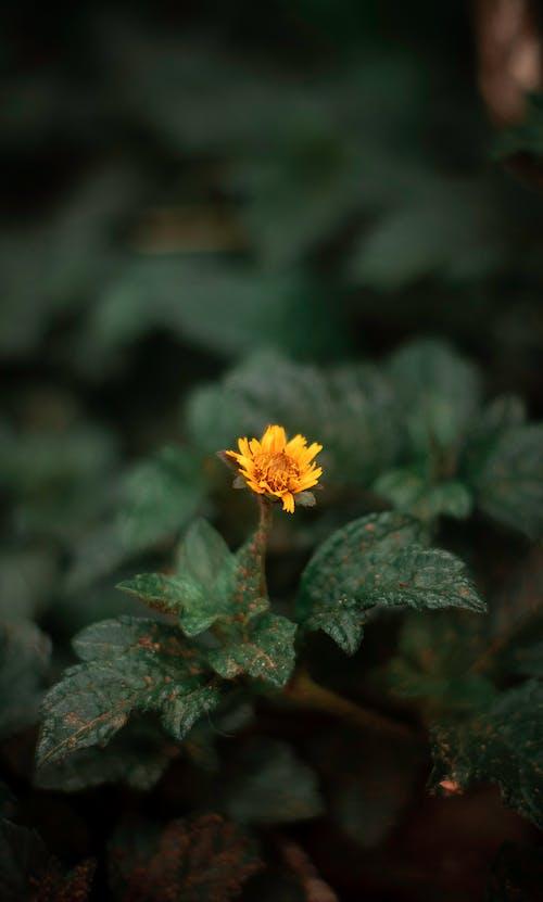 Free stock photo of beautiful flower, bg, brazilian, dark background