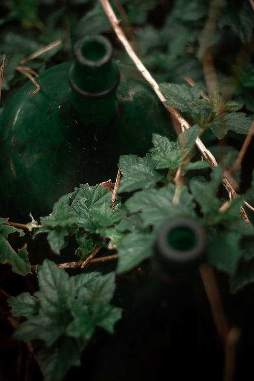 Free stock photo of bottle, conection, green, inspiration
