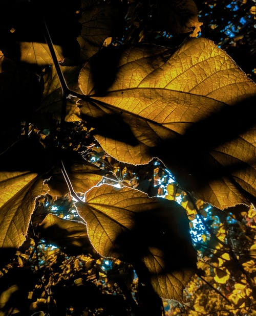 Безкоштовне стокове фото на тему «великий план, вирощування, Денне світло, денний час»