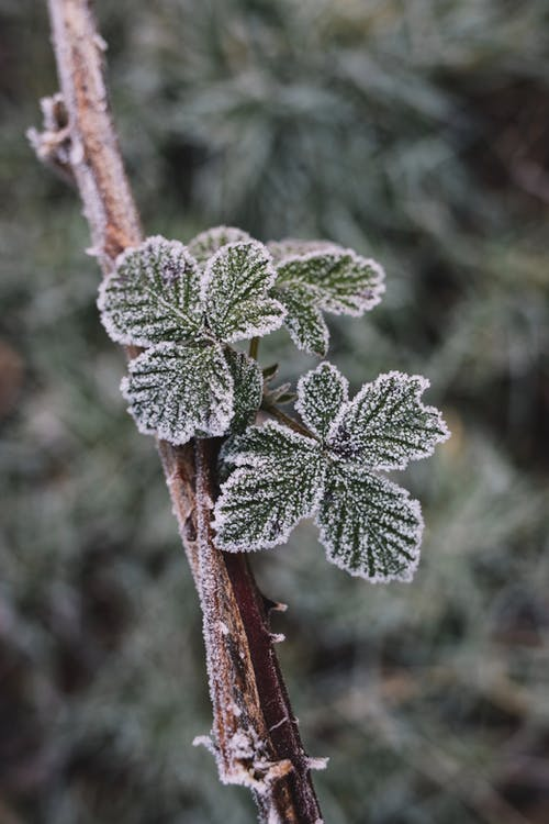 Kostenloses Stock Foto zu blätter, frost, gefroren, makro