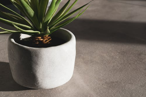 Green Plant on White Round Pot