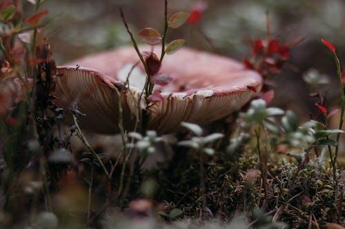 可以吃的, 增長, 天性, 微距攝影 的 免费素材图片