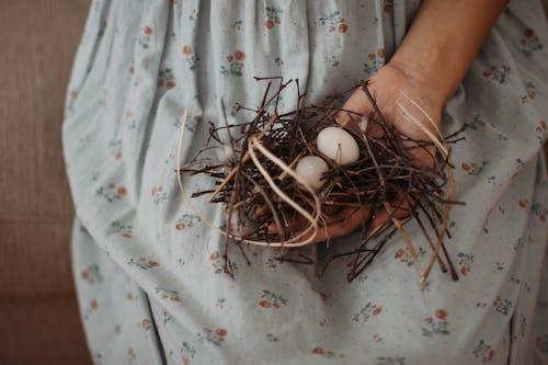 Základová fotografie zdarma na téma hnízdo, ruka, vejce