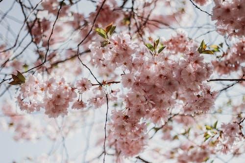 bitki örtüsü, Çiçek açmak, Çiçekler, dal içeren Ücretsiz stok fotoğraf