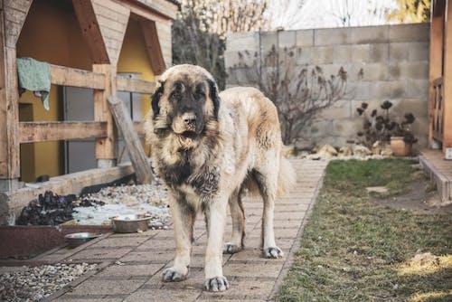 คลังภาพถ่ายฟรี ของ คนเลี้ยงแกะ, ตุรกี, ยุโรป, สัตว์