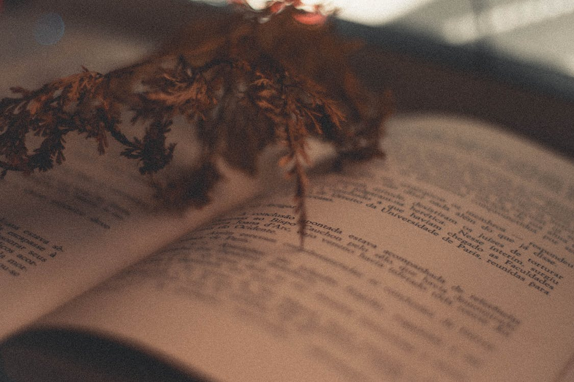 Brown Leaves on Book Page