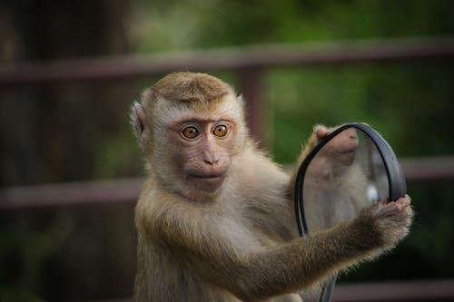 Free stock photo of inviting, mirror, monkey