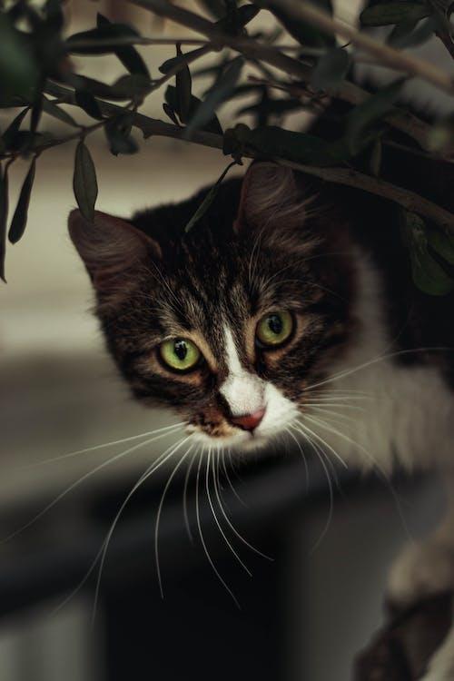 Brown Tabby Cat on Tree Branch