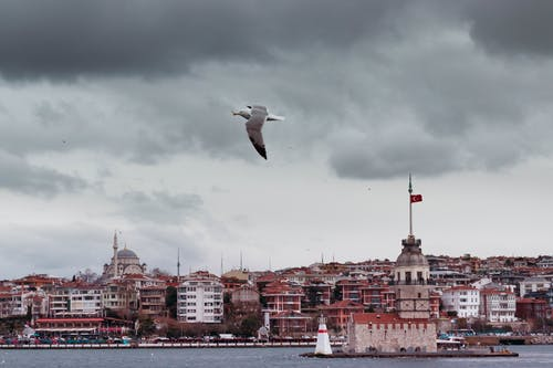 White Bird Volando Sopra Gli Edifici Della Città
