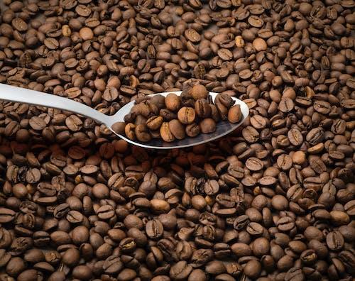 Fotos de stock gratuitas de alubias, café, cafeína, cuchara
